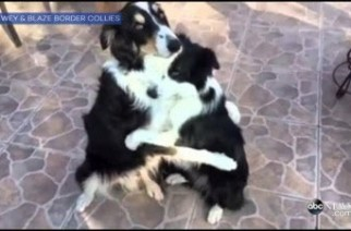 Un câlin canin très humain